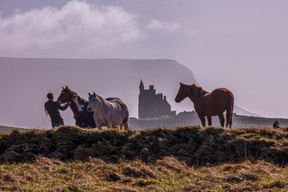 Mullaghmore Horses 2